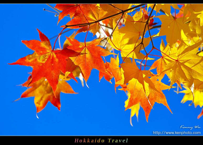 hok-uni32.jpg