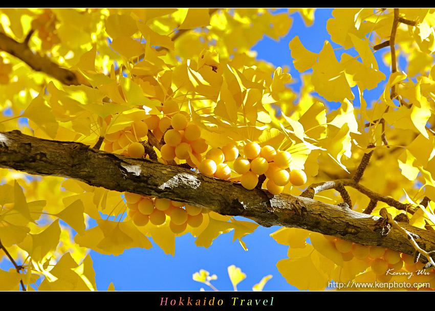 hok-uni47.jpg