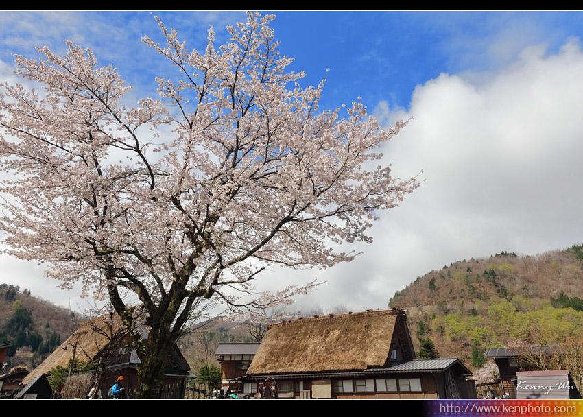 shiraka24.jpg