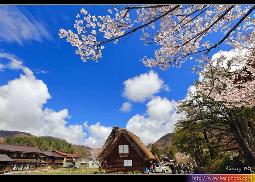 shiraka33.jpg