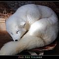 fox-vil03.jpg