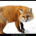 fox-vil04.jpg