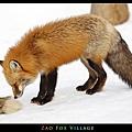 fox-vil05.jpg