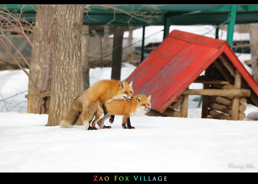 fox-vil07.jpg