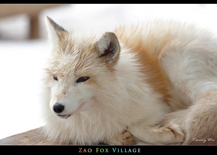 fox-vil10.jpg