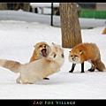 fox-vil11.jpg