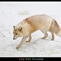 fox-vil15.jpg