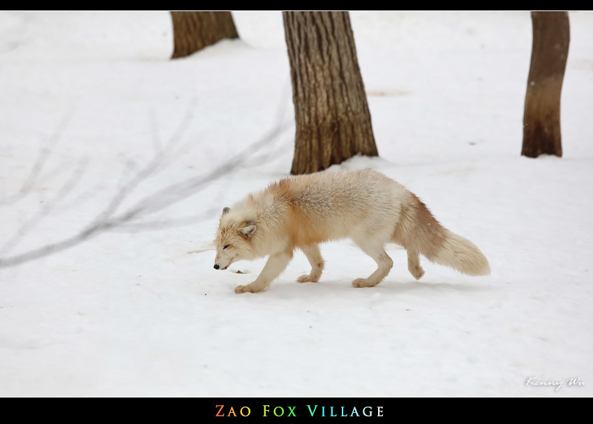 fox-vil14.jpg