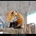 fox-vil16.jpg
