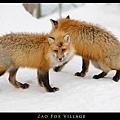 fox-vil18.jpg