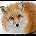 fox-vil17.jpg