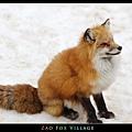 fox-vil19.jpg