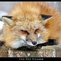 fox-vil20.jpg