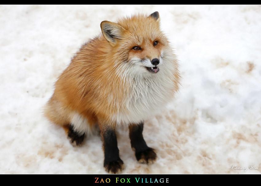 fox-vil23.jpg