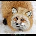 fox-vil27.jpg