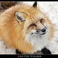 fox-vil26.jpg