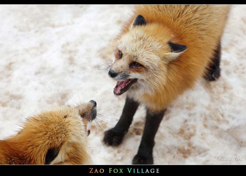 fox-vil29.jpg