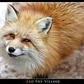 fox-vil30.jpg