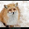 fox-vil28.jpg
