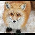 fox-vil32.jpg