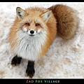 fox-vil33.jpg