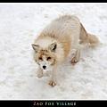 fox-vil35.jpg