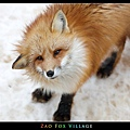 fox-vil36.jpg