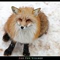fox-vil38.jpg