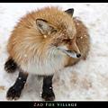 fox-vil37.jpg