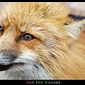 fox-vil40.jpg
