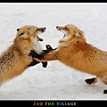 fox-vil44.jpg
