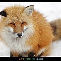 fox-vil43.jpg