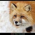 fox-vil42.jpg