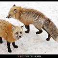 fox-vil46.jpg