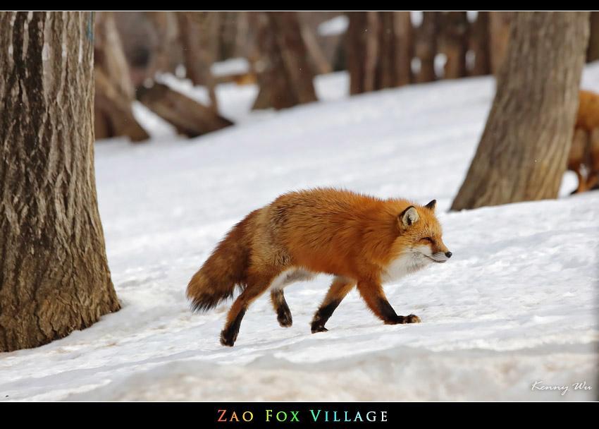 fox-vil01.jpg