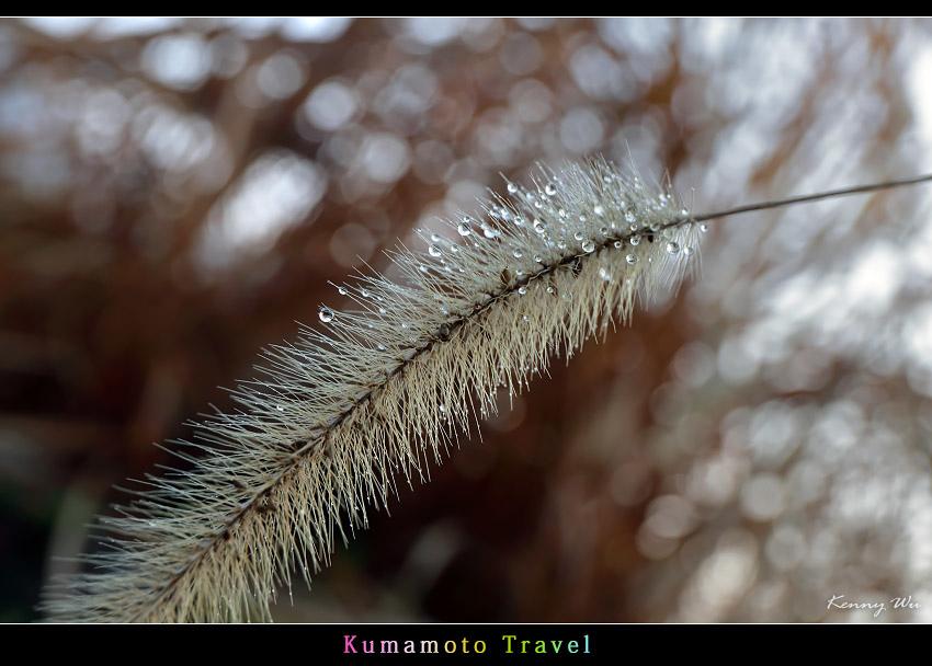 kurokawa26.jpg