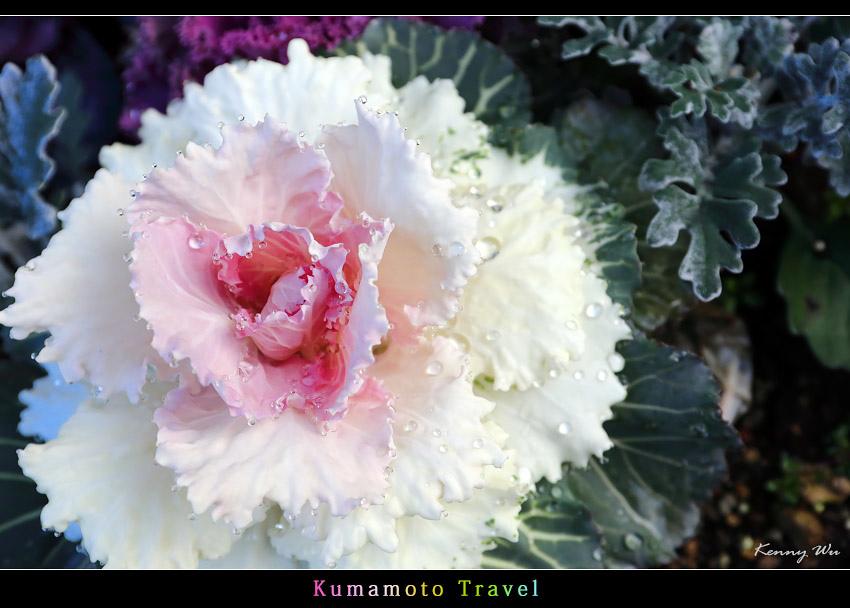 kurokawa27.jpg