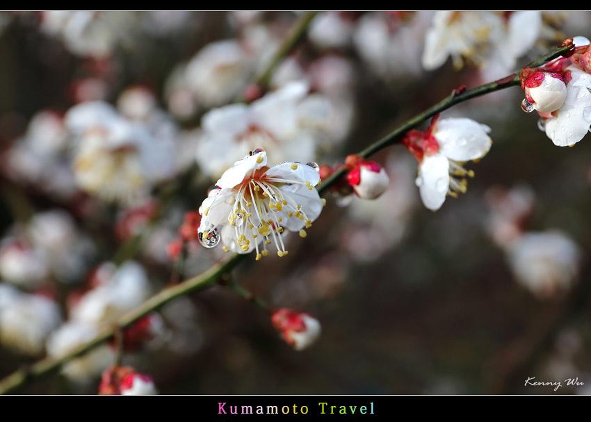 kurokawa29.jpg