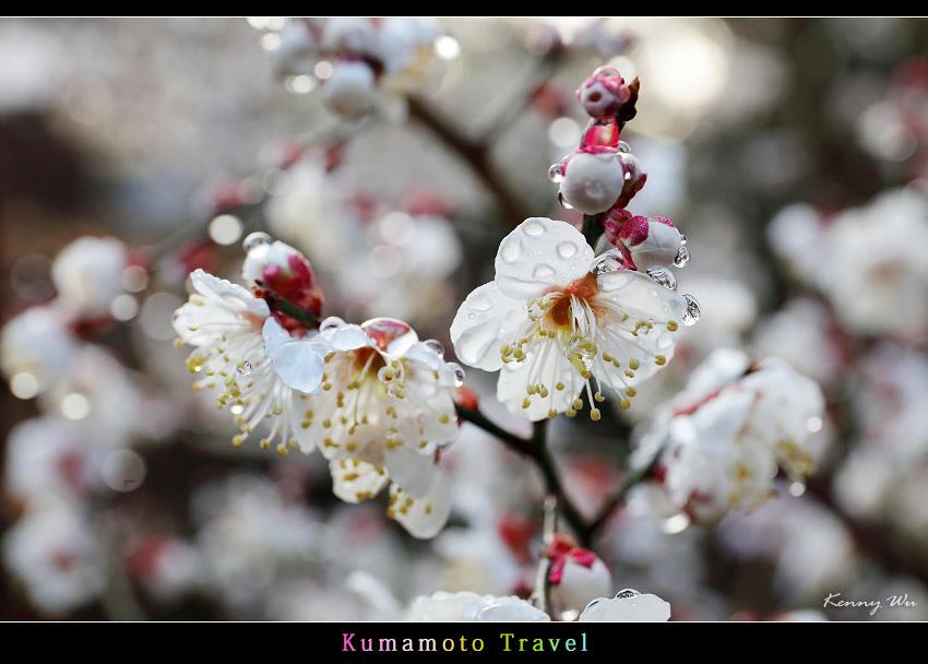 kurokawa30.jpg