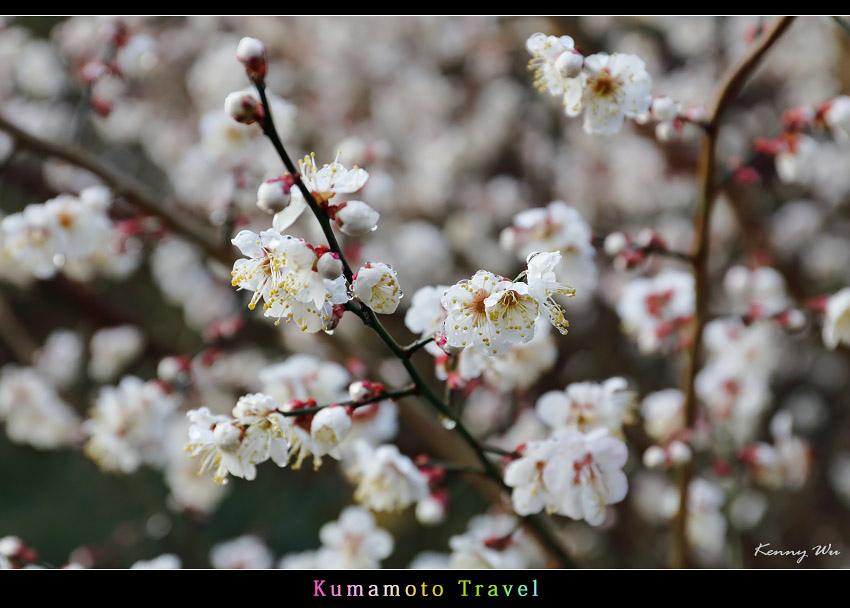 kurokawa33.jpg