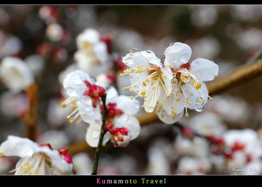kurokawa31.jpg