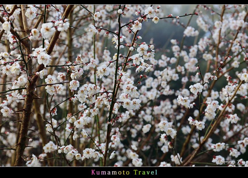 kurokawa32.jpg