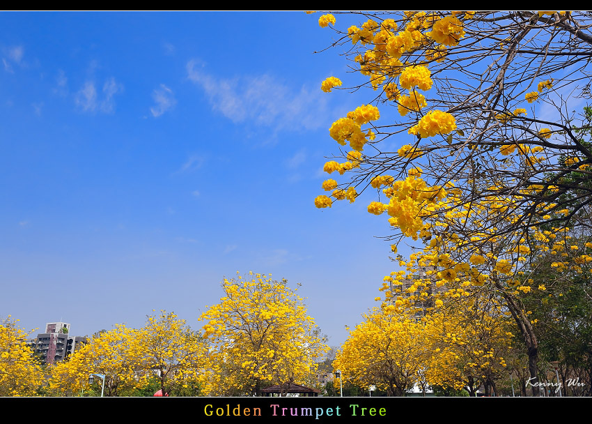 goldtr23.jpg