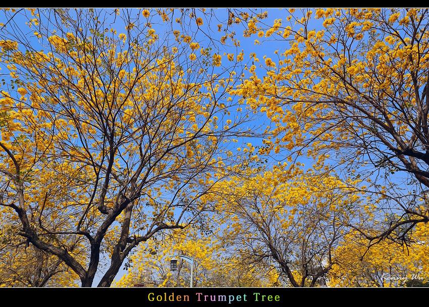 goldtr22.jpg