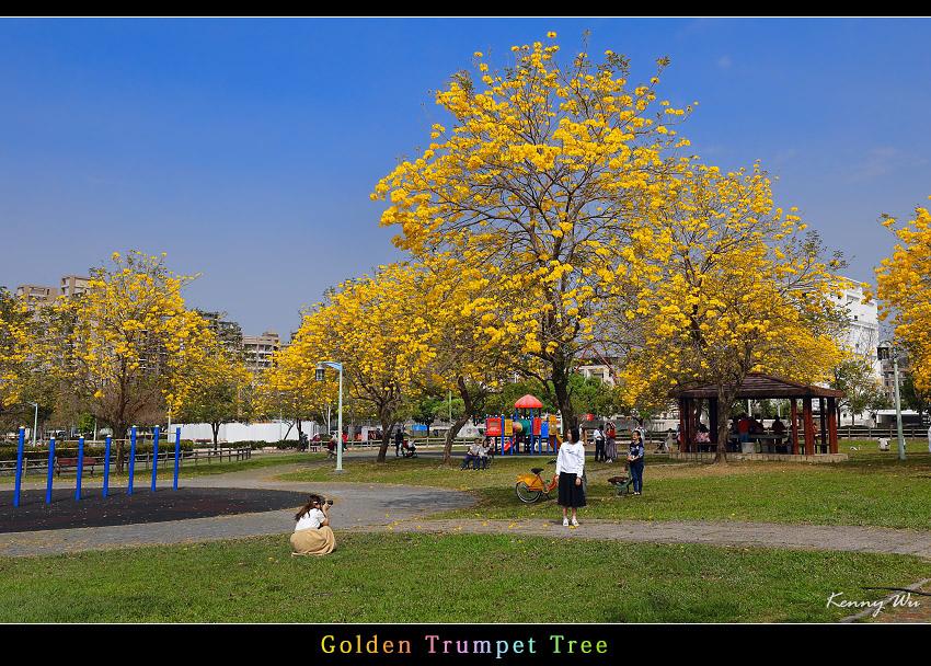 goldtr24.jpg