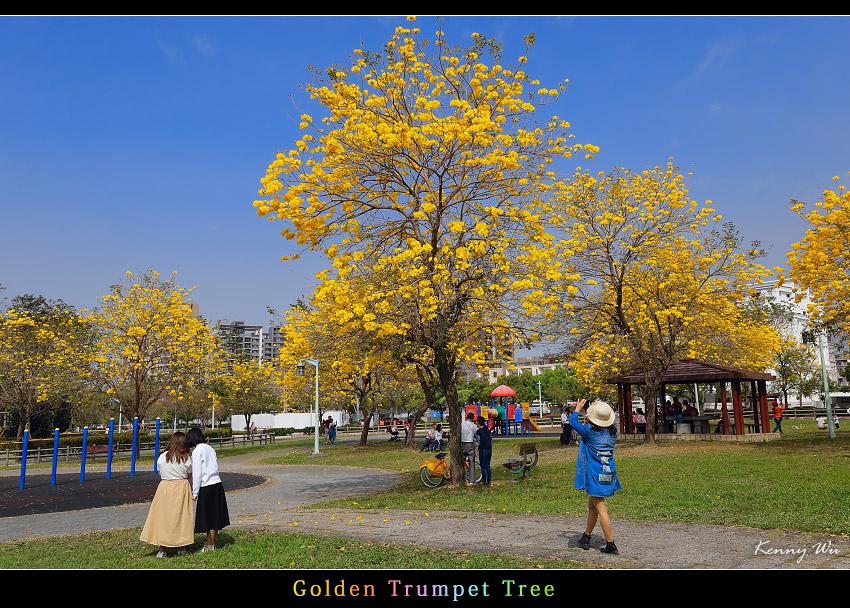 goldtr25.jpg