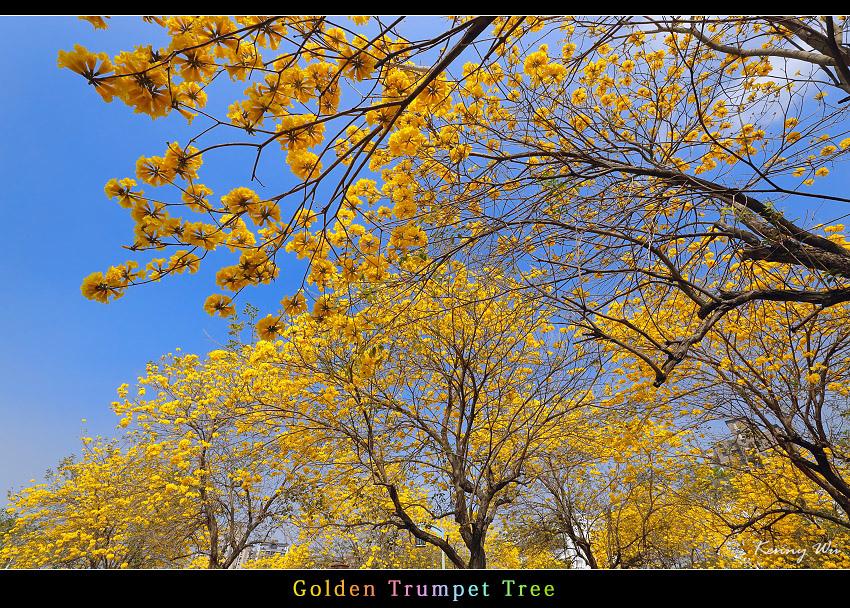 goldtr31.jpg