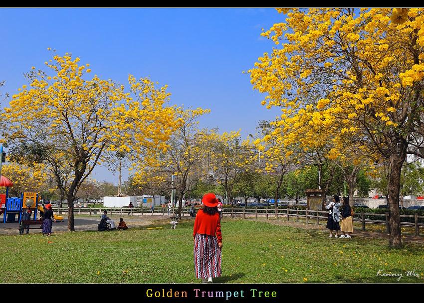 goldtr44.jpg