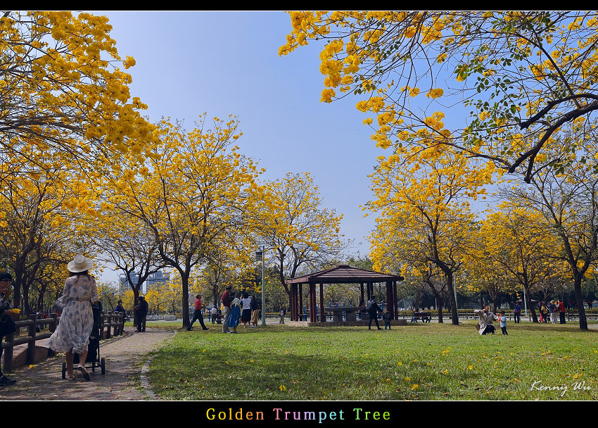 goldtr40.jpg