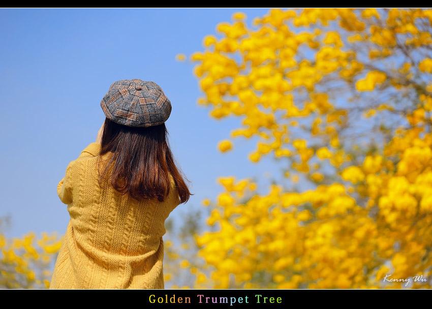 goldtr46.jpg